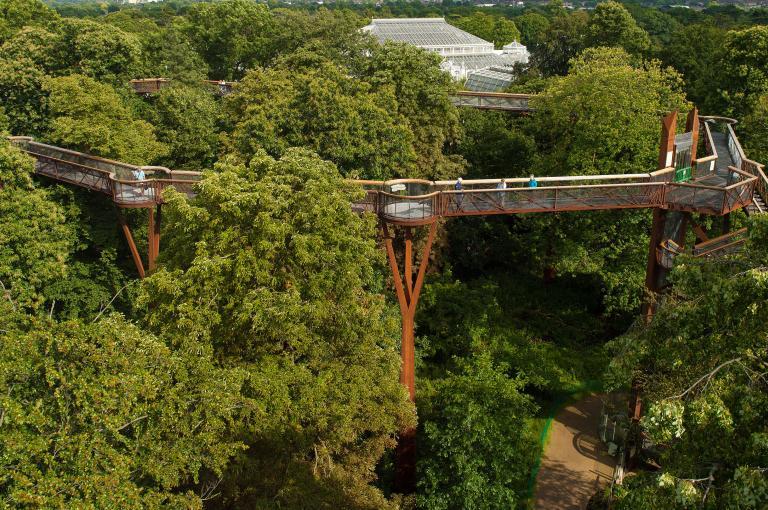 Aerial view of the Treetop Walkway
