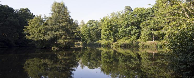 Lake at Wakehurst in the summer
