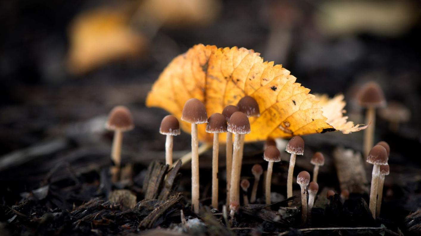 State of the World's Fungi