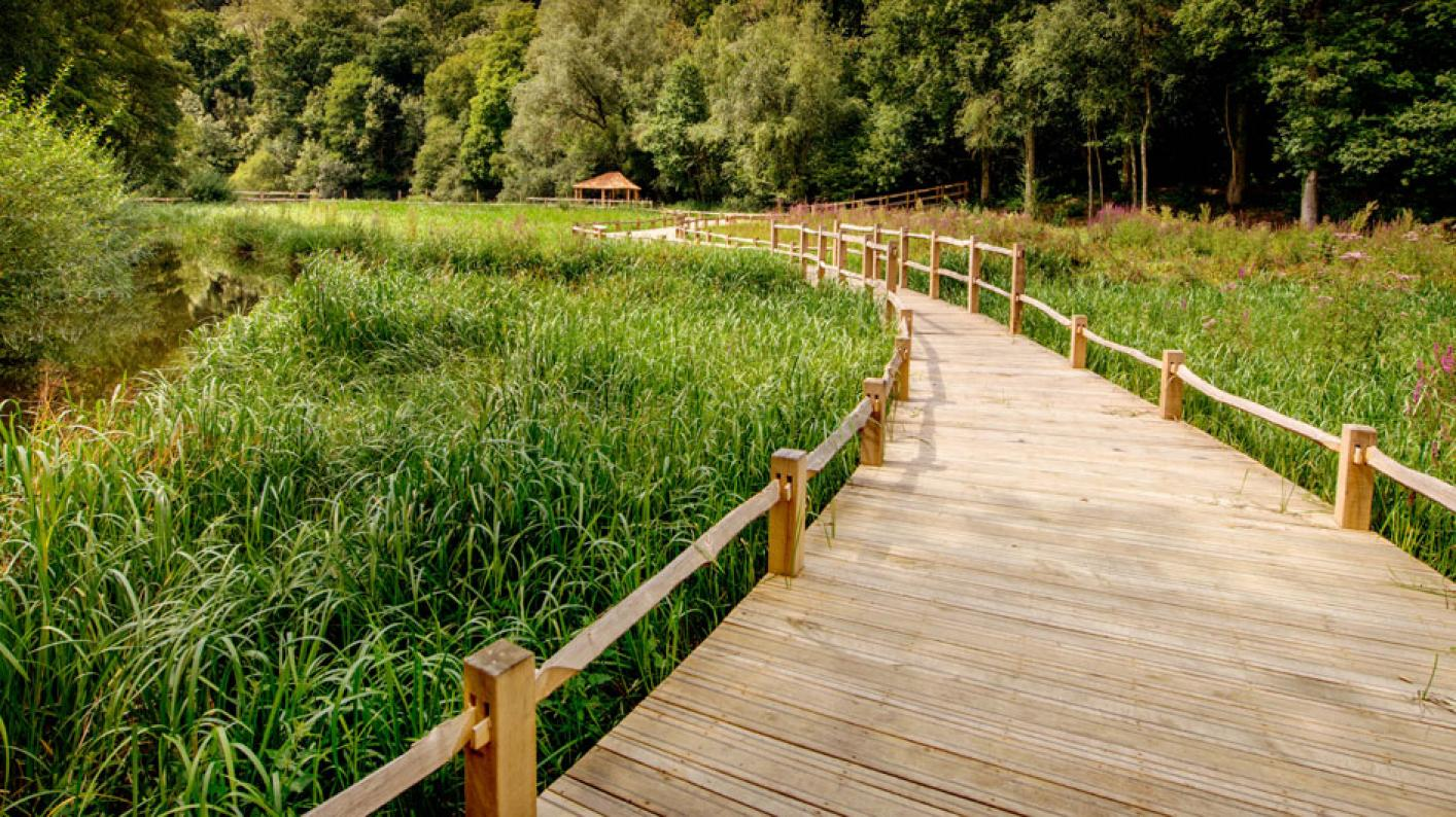 The board walks sweeping through the wetlands
