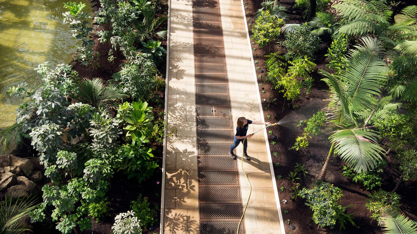 A horticulturalist waters plants in the Temperate House