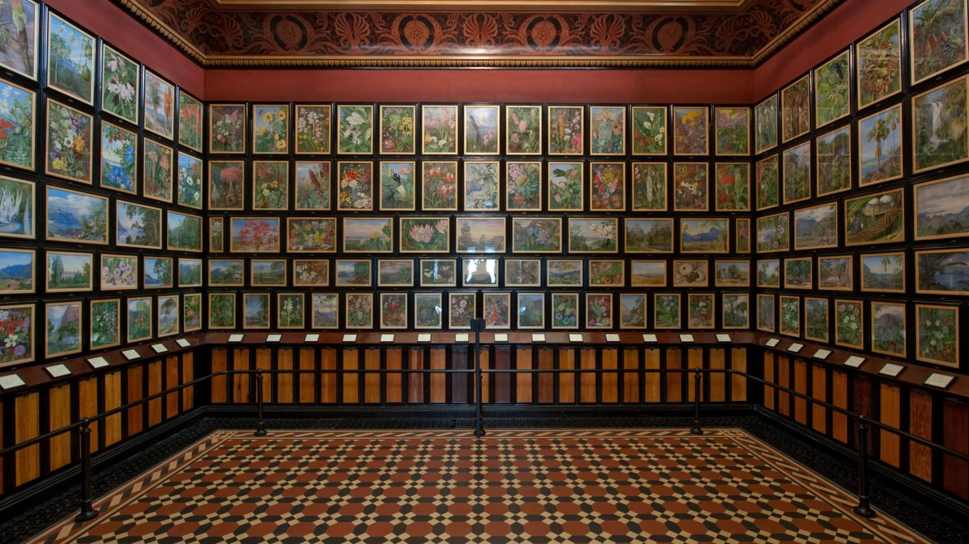 Paintings on display in the Marianne North Gallery at Kew
