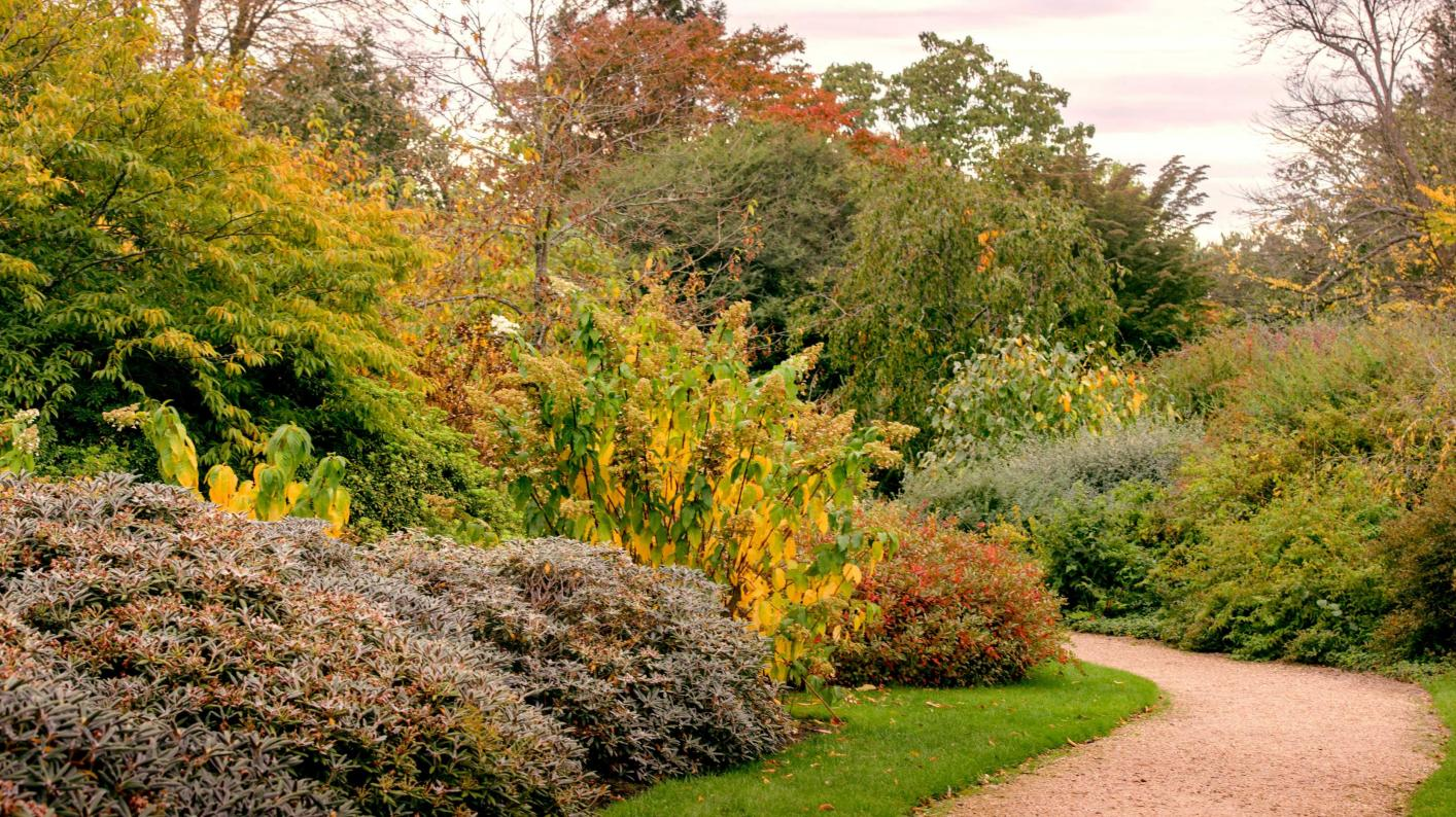 Autumn colours in the Tony Schilling Asian Heath Garden