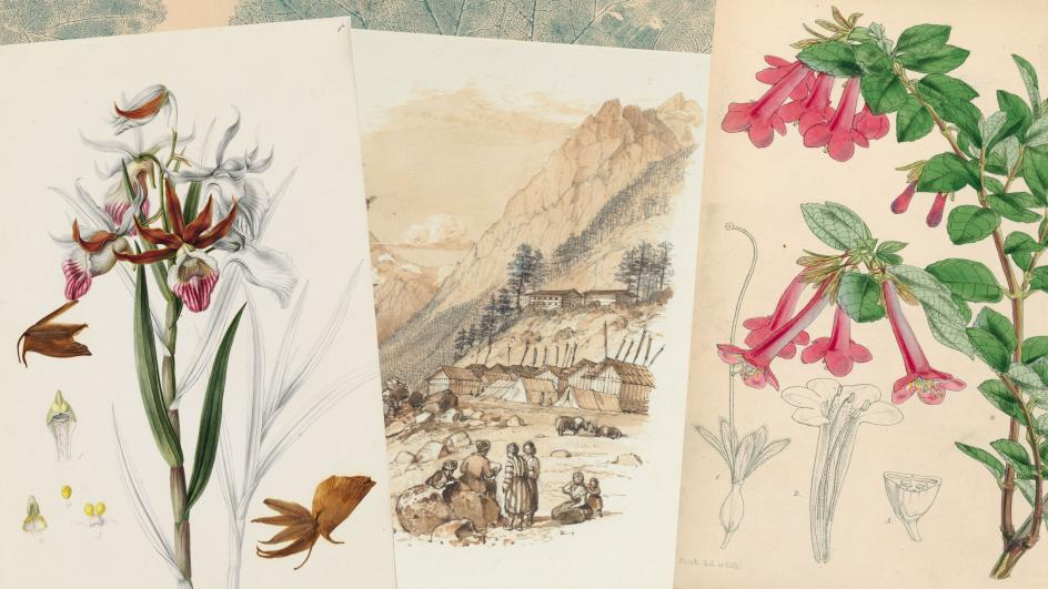 Paintings from the Illustrations and Artefacts Collection
