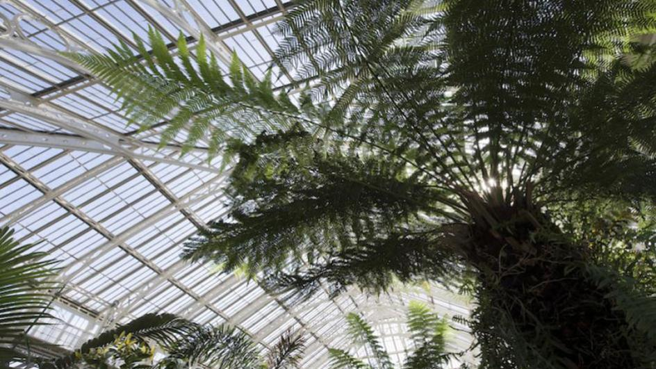 View inside Temperate House