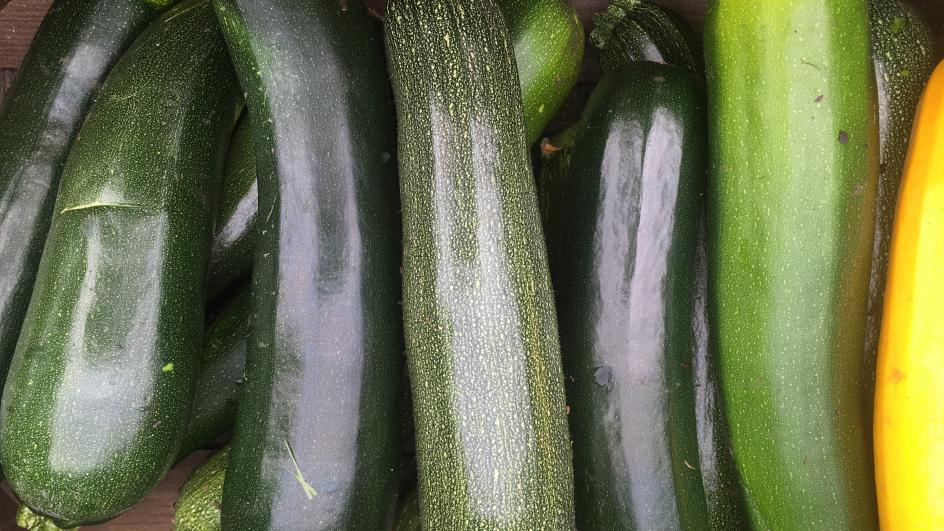 Courgettes, Kitchen Garden, RBG Kew