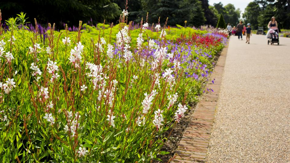 Flower beds at Broad Walk Borders