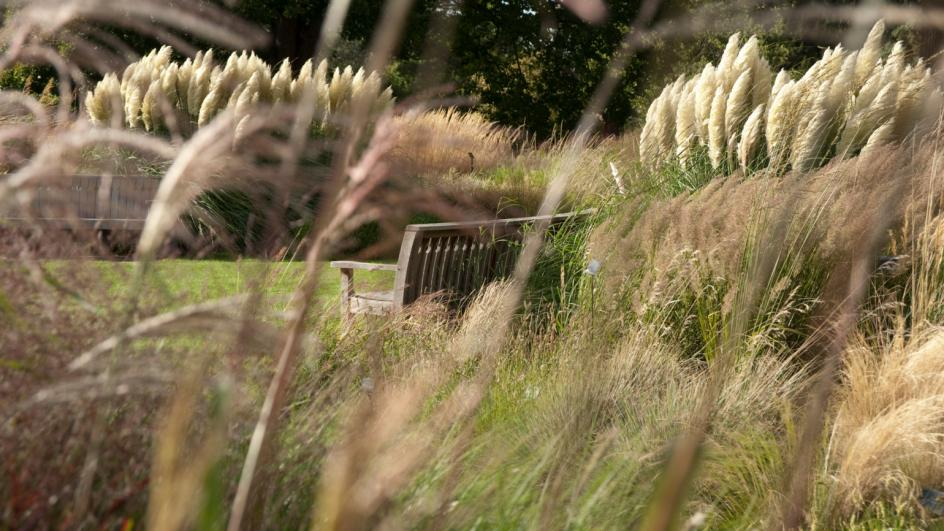 A bench in the Grass Garden at Kew