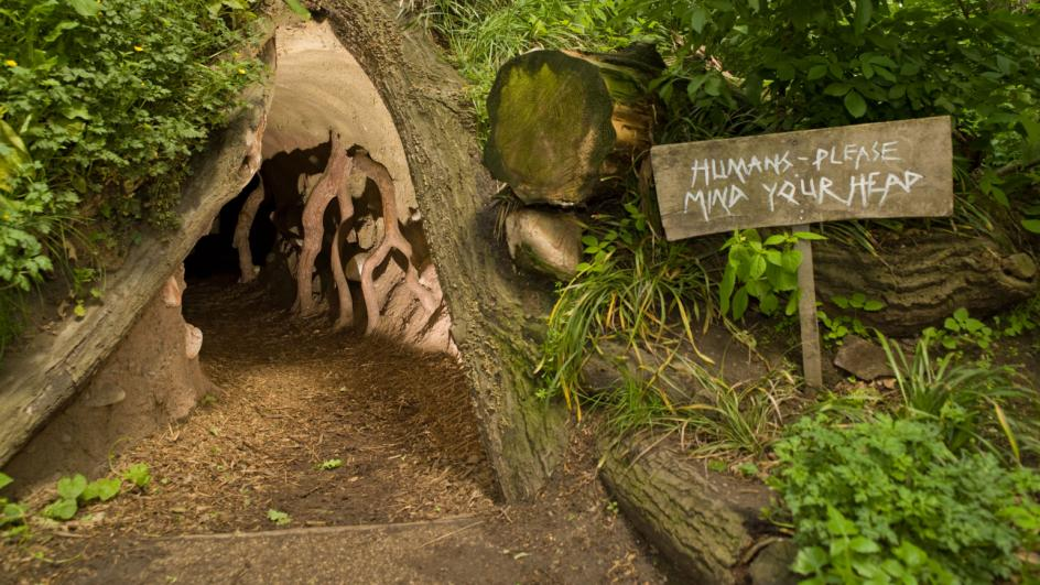 Giant badger sett at Kew
