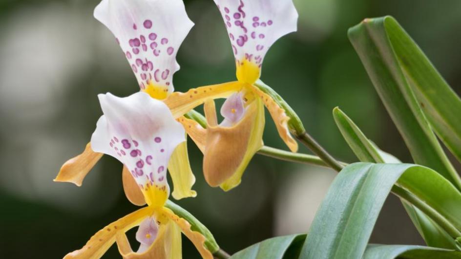 Top 13 species discovered in 2018 | Kew
