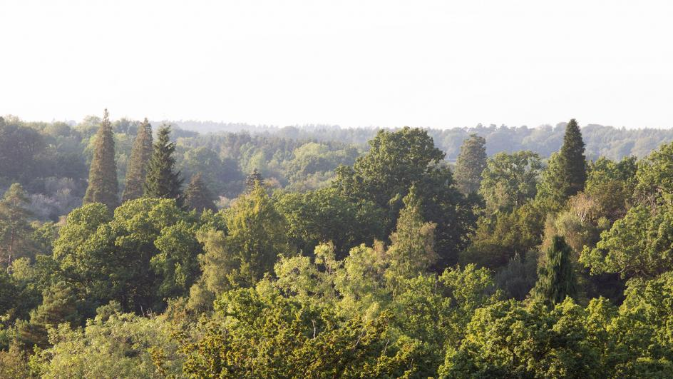 View above Loder Valley, Wakehurst Place, Sussex.