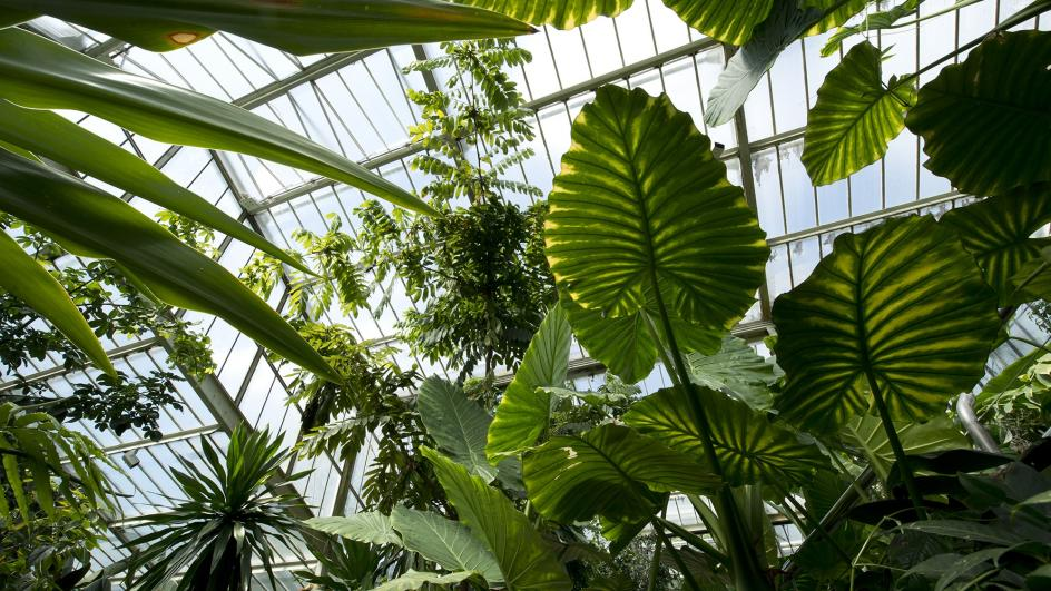 Inside the Princess of Wales Conservatory