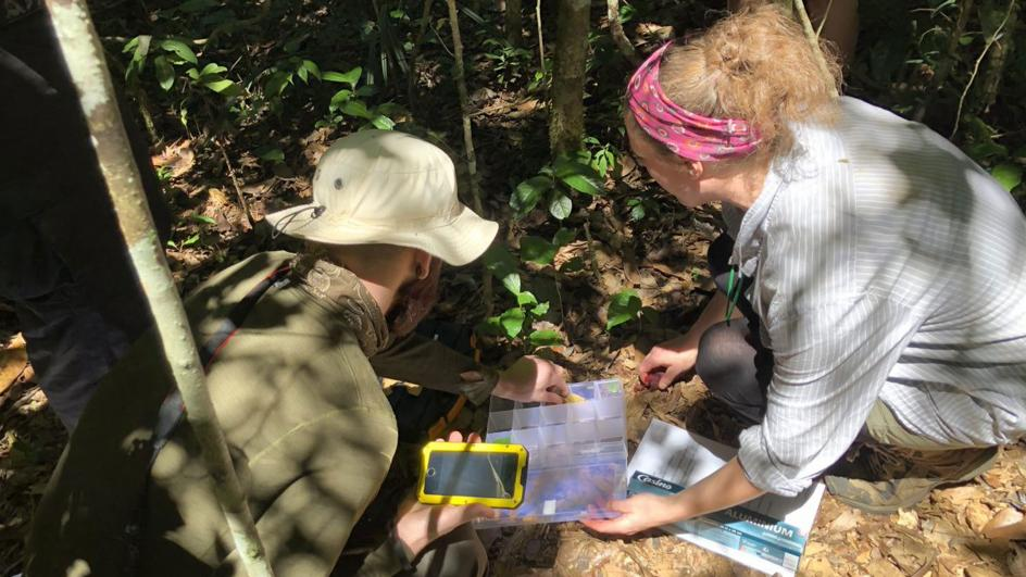 Researchers gathering specimens in the forest