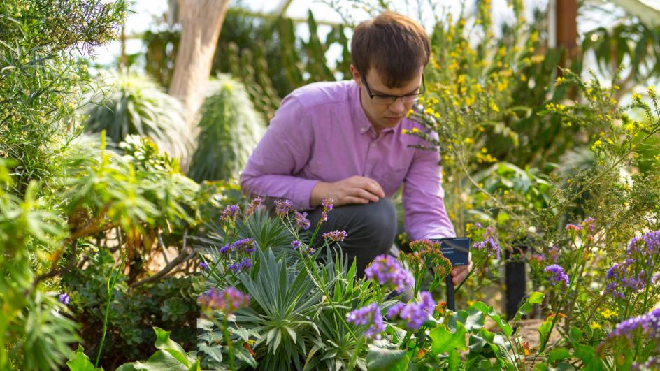 Researcher looking at plants in Kew's Princess of Wales Conservatory