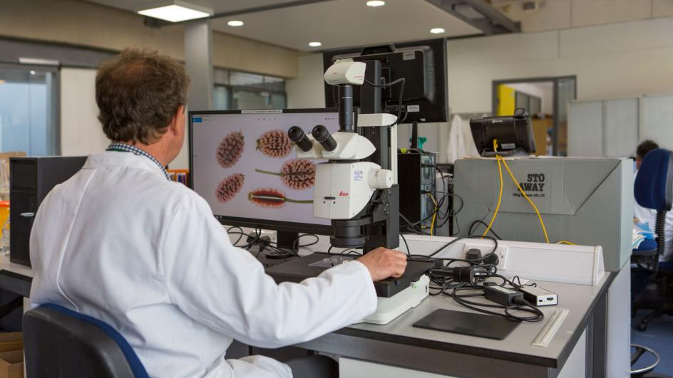 Researcher looking at computer screen with a image of seeds from the microscope