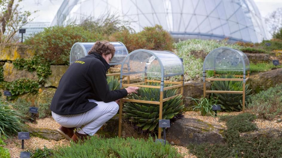 PhD student looking at Aloes outside of Kew's Alpine House