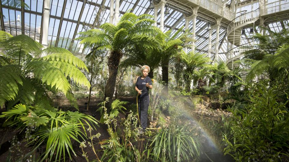 A member of the horticulture team watering plants in the Temperate House © RBG Kew/Jeff Eden
