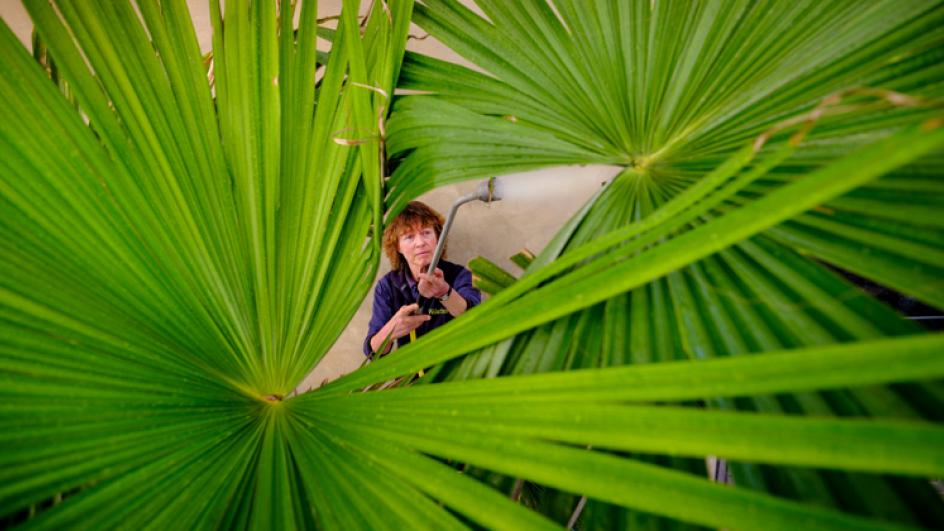 Watering palm