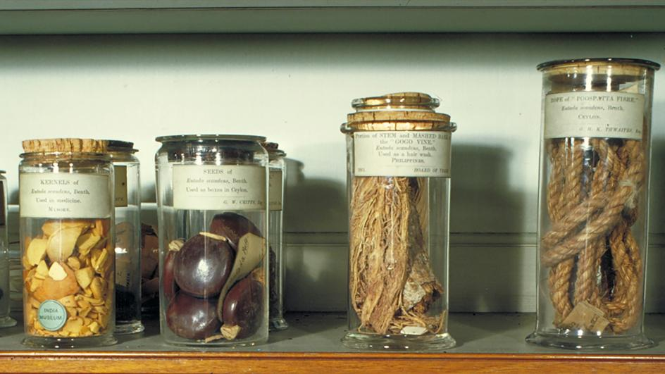 Economic Botany Collection items on display in Museum Number One