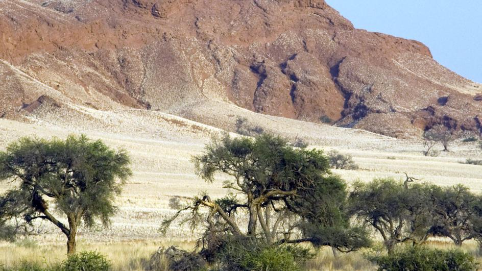 Trees infront of sandunes in Namibia