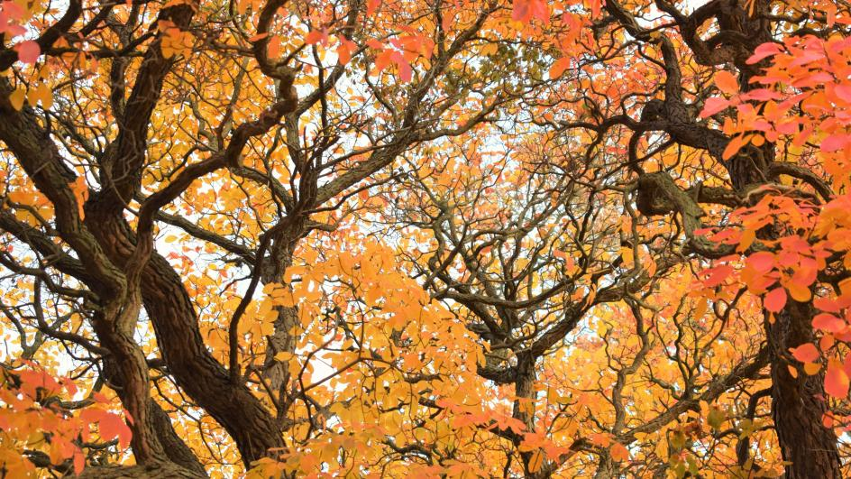 Autumn canopy of colourful leaves