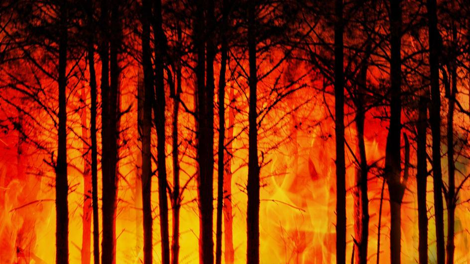 Tree trunks surrounded by raging orange flames