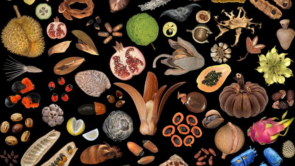 An artist look at seeds against a black backdrop