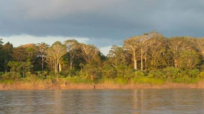 Amazon forest and river