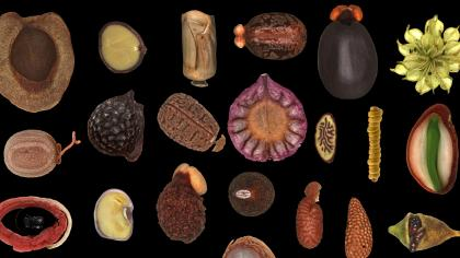 Seed diversity - image of lots of different seeds on a black background