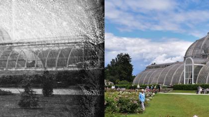 Palm House then and now