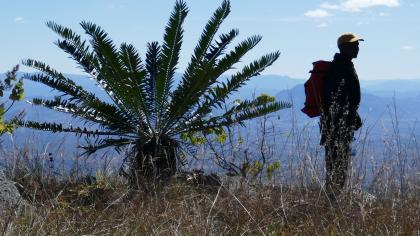 Man stood on a mountain next to large cycad