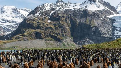 A beach crowded with penguins infront of a mountain landscape