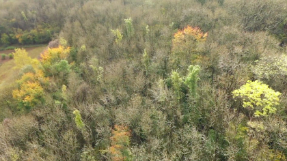 Aerial view of woodland in Sussex