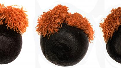 Three seeds with orange hair like tufts