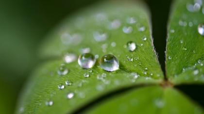 Close-up photography of water droplets on leaf