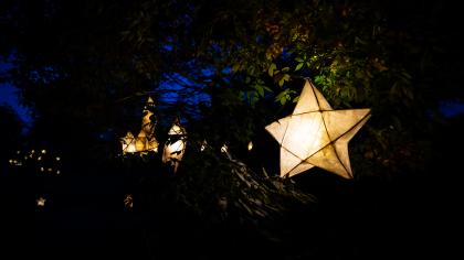 Shining star lanterns amongst trees at Glow Wild