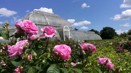 Kew's Rose Garden with Palm House in the background
