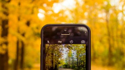 Smartphone taking picture of yellow leaves on autumn trees