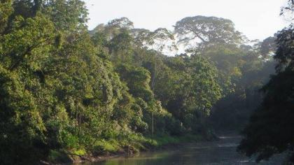 Amazon rainforest with river