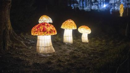 Lanterns of mushrooms that are red with white spots