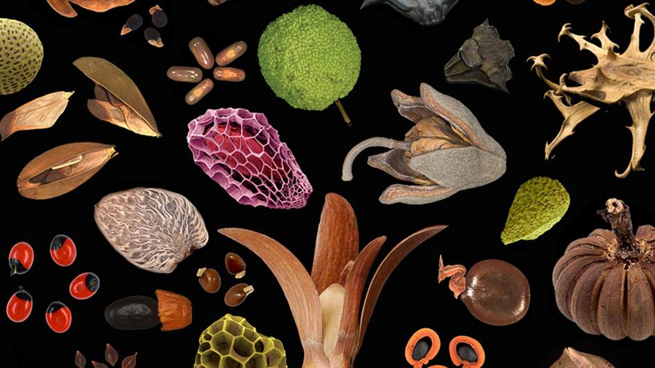 An artist look at various seeds against a black backdrop