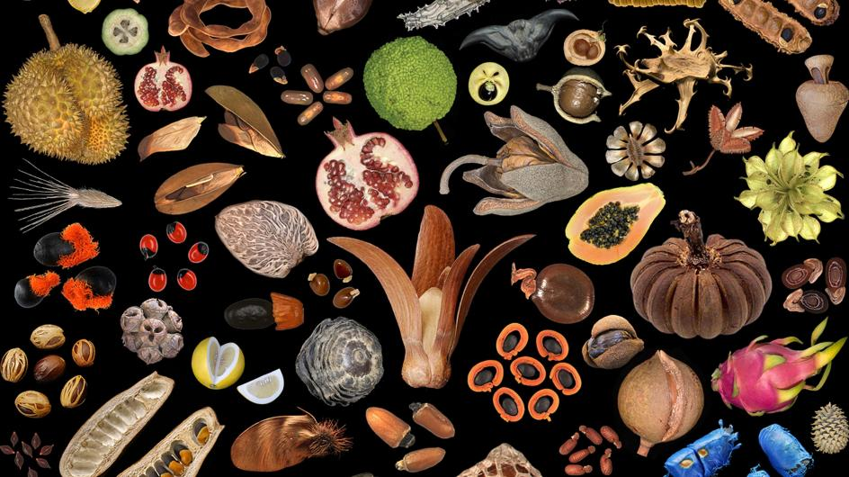 An artist display of seeds and fruit against a black background
