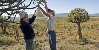 Collecting Aloe dichotoma seeds (Credit: Wolfgang Stuppy)
