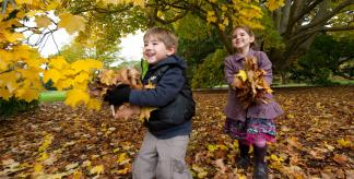 Children playing in the autumn leaves