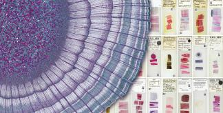 Microscope Slide Collection