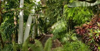 Inside Kew's Palm House