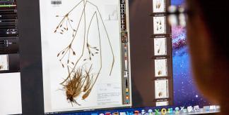 Herbarium specimen digitisation