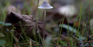 Relationships between plants and fungi (Credit: Lukas Large)
