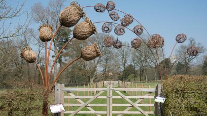 UK Native Seed Hub Campion sculpture
