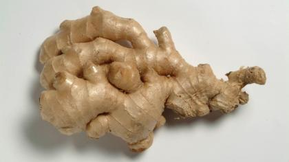 Thick, branched ginger rhizome (underground stem) with a brown outer layer and yellow centre